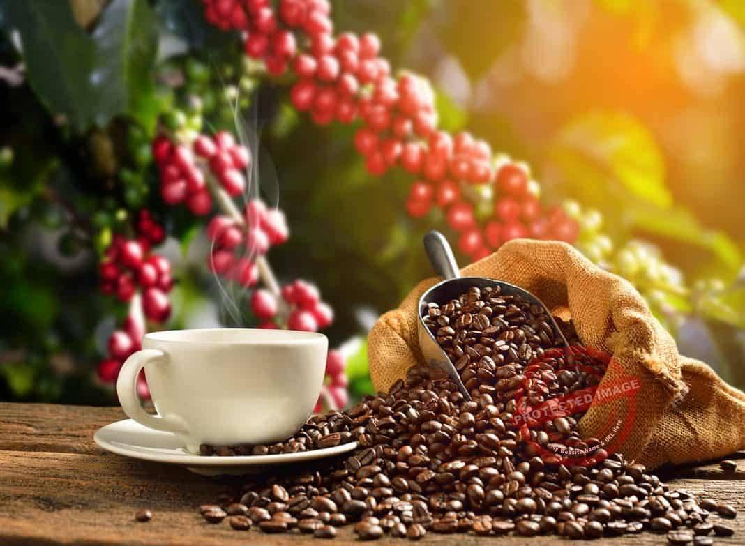 Best Budget Electric Coffee Grinder