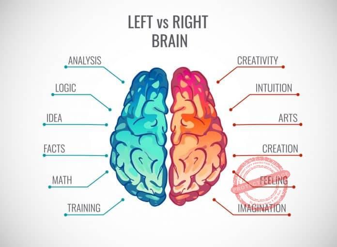 Right And Left Brain And Entrepreneurship